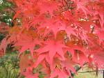 chiteki_top_fall.jpg